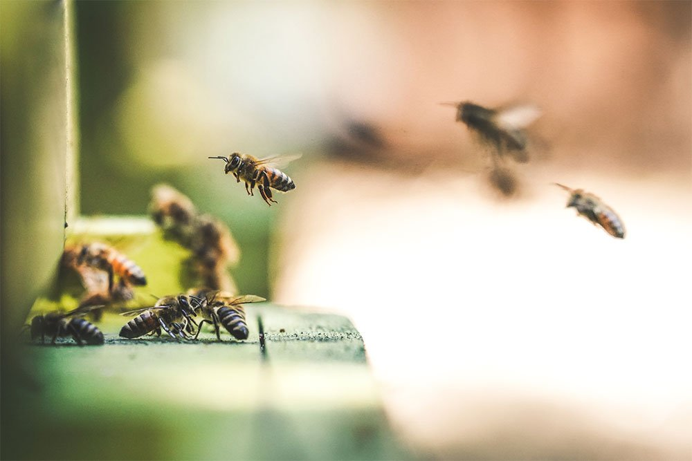 spring-cleaning-in-the-apiary