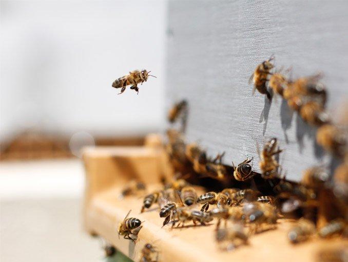 beekeeping-store