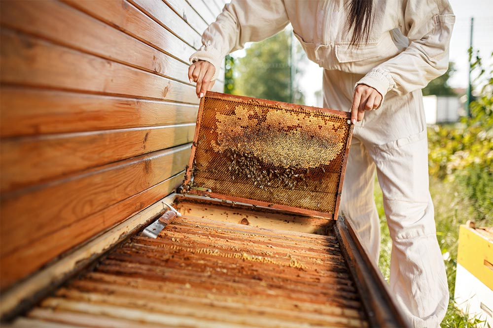 the-importance-of-forage-for-bees2