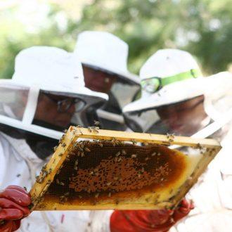 basic-beekeeping-course-pretoria-2