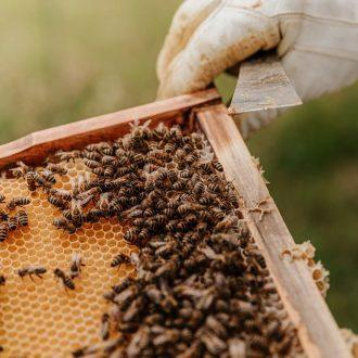 beekeeping-basics-course