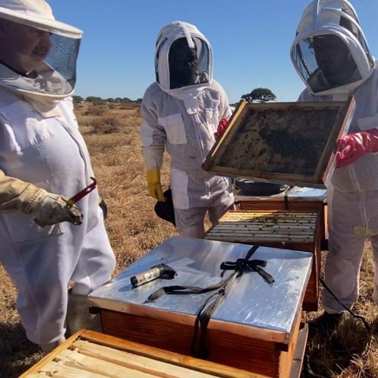 beekeeping-basic-course-pretoria